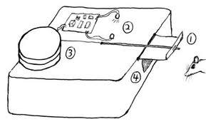 Innovative Mousetrap